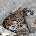 LA Zoo April 2021 -418