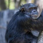 LA Zoo April 2021 -382