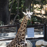 LA Zoo April 2021 -374