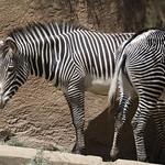 LA Zoo April 2021 -352