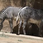 LA Zoo April 2021 -351