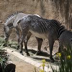 LA Zoo April 2021 -349