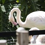 LA Zoo April 2021 -343