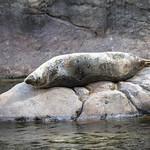 LA Zoo April 2021 -503