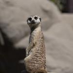 LA Zoo April 2021 -498