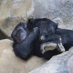 LA Zoo April 2021 -446