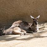 LA Zoo April 2021 -344