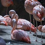 LA Zoo April 2021 -331