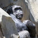 LA Zoo April 2021 -429