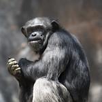 LA Zoo April 2021 -423