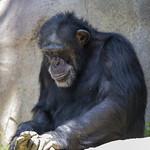 LA Zoo April 2021 -392