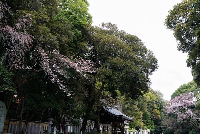 Photo:20210320_162811 By gugu800