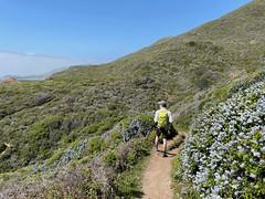 2021.04.13 - hillside in bloom