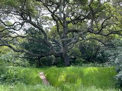 2021.04.13 - grand oak