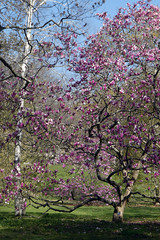 Planting Fields Arboretum - April 2021