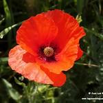 Flora y fauna en las lagunas de La Guardia (Toledo) 24-4-2021