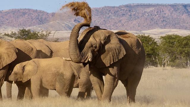 Im Etosha-Nationalpark.