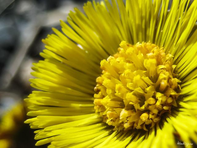 Photo:Spring finally! - Le printemps enfin! By monteregina