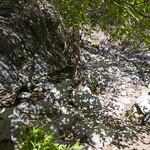 Eaton Canyon Falls in Alta Dena -376