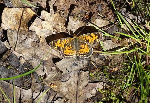 Butterfly DSC00119