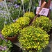 今天逛花市沒有買植物,實在貴得買不下去。買了兩個漂亮又價位合理的花器,準備構思家中植物的換盆工作。