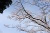 Photo:20210327_145942 By gugu800