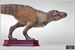 """Tyrannosaurus  """"Winter Wilson""""  (1:35)"""