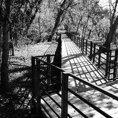 Yanaguana Trail