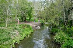 Hogsmill River