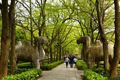 Nanjing 南京 2021