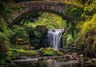 Jesmond dean waterfall