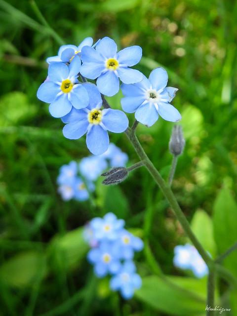 Photo:Delicate blue - Bleu délicat By monteregina