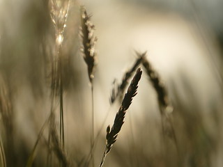 Gentle breeze...