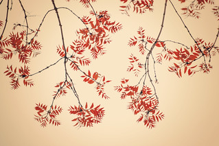 Mille feuilles.