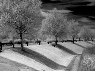 Imagen en infrarrojo Parque del Agua de Zaragoza
