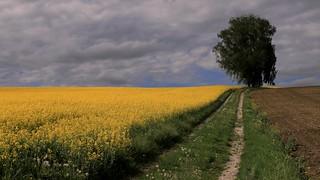 Es gibt ihn noch,den Frühling 2021   -   Springtime 2021, it still exists.