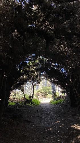 Jug Handle State Reserve, Mendocino