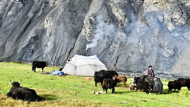 Nomaden auf der Sommerweide im abgelegenen Dolpo-Gebiet/Nepal.