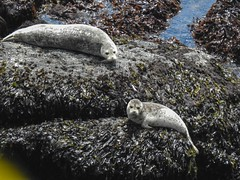 Oregon Coast Wildlife - May 2021