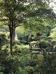 Evening idyll, bench and view to John Howard Payne bust, Oak Hill Cemetery, Washington, D.C.