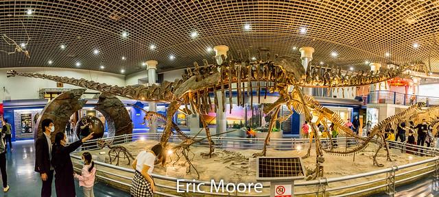20210504-Natural History Museum Sauropod-8.jpg