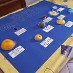 040 - Sistema Gastronomico di Enrico 12 anni_b