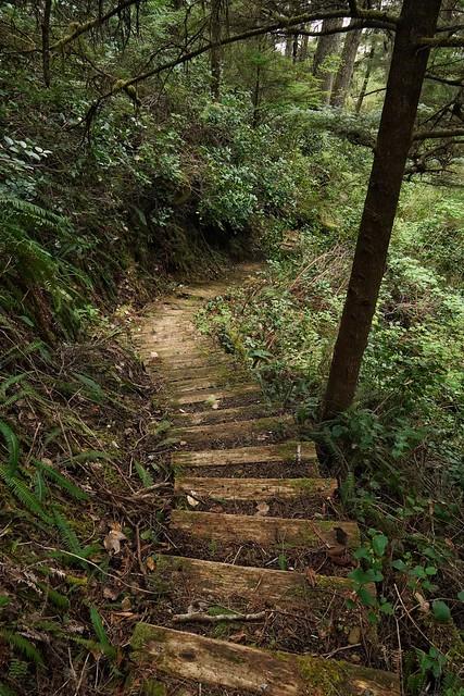 Photo:Down into the wilderness   Descente vers les profondeurs vertes By VinceTraveller