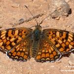 Fauna y flora en las lagunas de La Guardia (Toledo) 6-6-2021