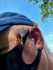 May 25, 2021 Magic Cicadas