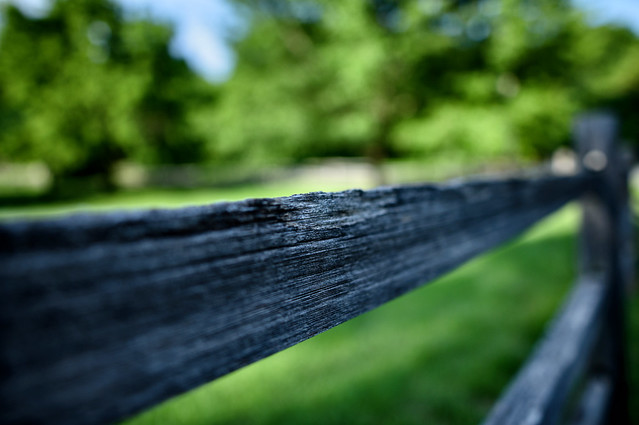 By the Fence