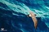 Photo:The Wall of Sea By Michiyo Photo