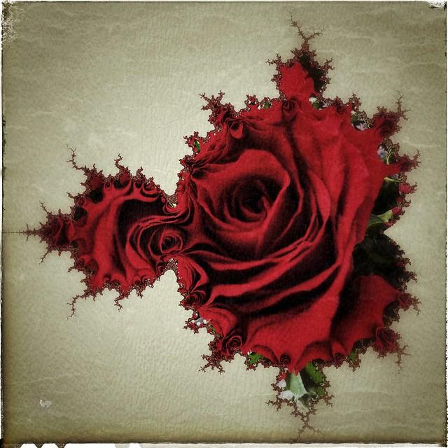 Mandelbrot rose