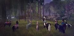 Field Trip to Lunaria