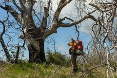 Ward looking for secrets in a ghost tree